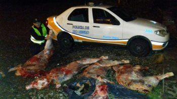 Los animales faenados estaban ocultos en la caja de una Toyota Hilux.