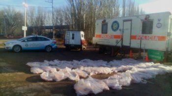 Secuestraron más de mil kilos de carne ilegal en la Ruta 22