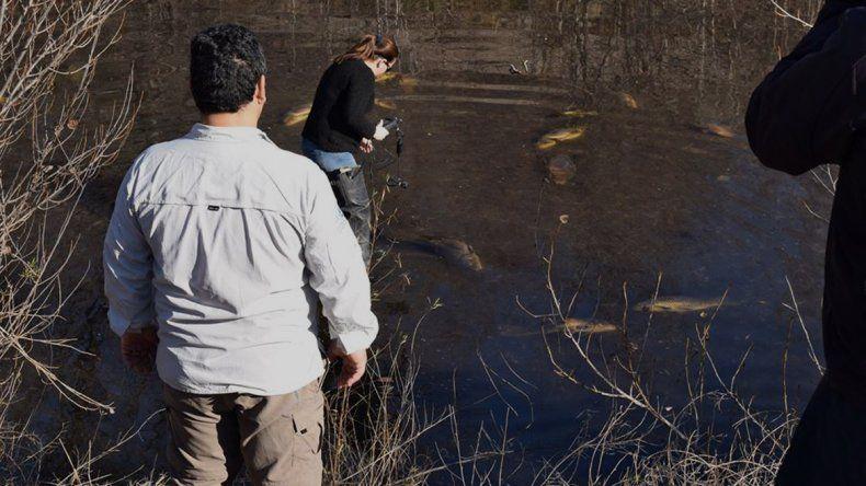 Productores enojados tras conocerse la causa de la mortandad de peces en el río Negro