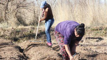 Casi todas las huerteras son mujeres de las tomas de la zona norte y arrancaron de cero con la plantación.