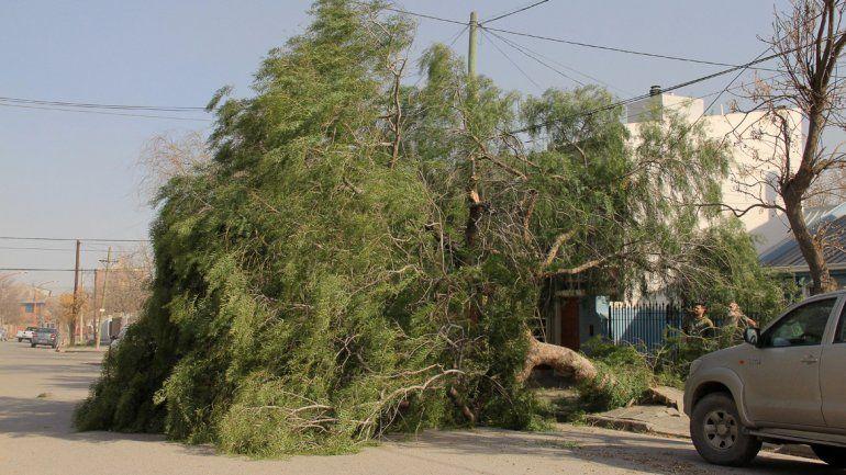 Consejos para evitar problemas eléctricos por el viento