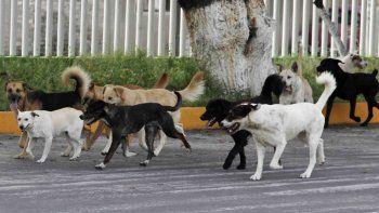 Ingresó al refugio de la Isla Jordán y se llevó dos perros sin permiso