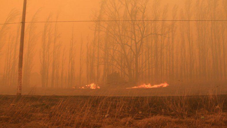 El fuego consumió más de 21 mil hectáreas por incendios forestales en Río Negro