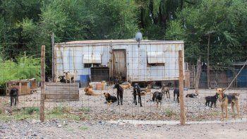 Dos de los cuatro perros agresivos de la plaza San Martín fueron retirados por un desconocido del refugio de la Isla.