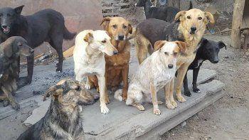 Los perros tienen que ser adoptados para conseguir una vida mejor.