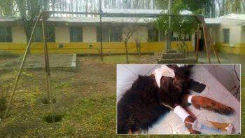 Denuncian a una escuela por abandonar a un perro herido