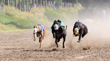 La prohibición busca evitar el maltrato animal.