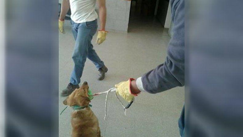 Polémica por el retiro de perros callejeros del hospital