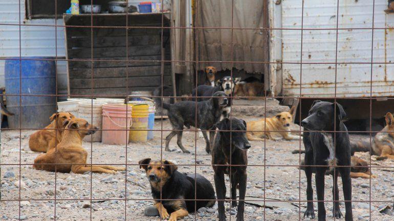 Los animales fueron trasladados a la sede de la perrera en la Isla Jordán.