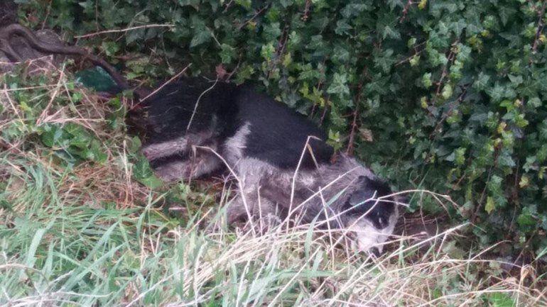 Mataron a un perro en Bariloche y el reclamo se extendió por todo el país