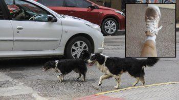 denuncio que dos perros la mordieron en pleno centro