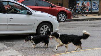 Según la vecina, son los mismos perros que atacaban en la plaza.