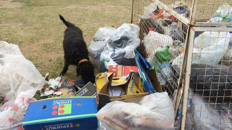 Los perros se encargan de desparramar la basura por todo el parque.