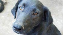 piden una fiscalia para casos de maltrato animal en rio negro