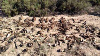 Indignante: hallaron un matadero ilegal de caballos en Villavicencio
