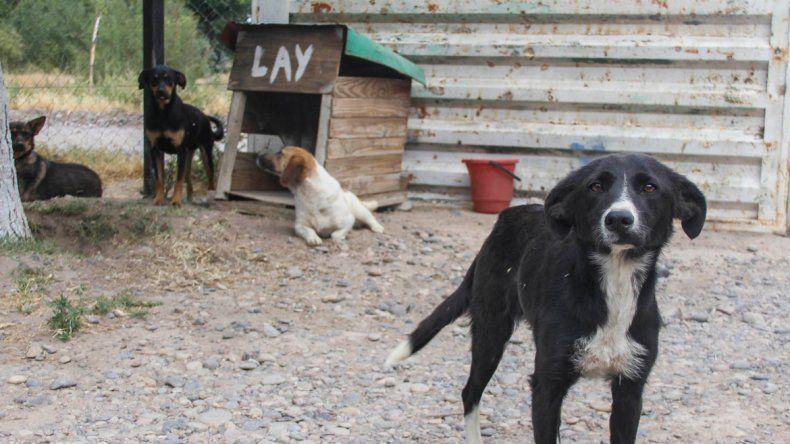 Los voluntarios van al refugio cada sábado para cuidar a los perros y entregarlos a familias adoptivas.