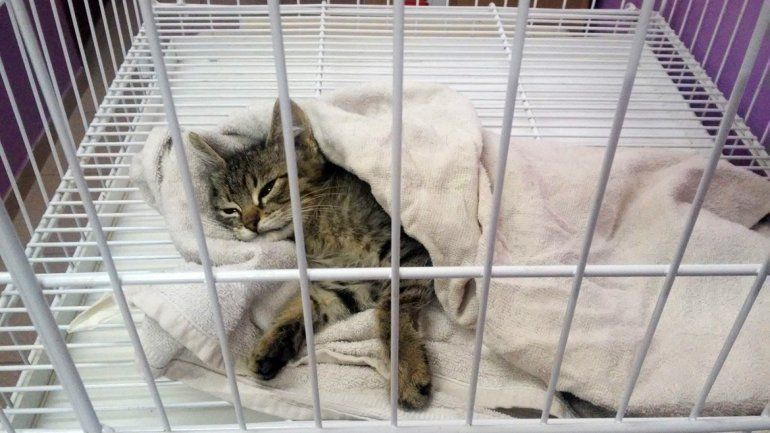 La emotiva campaña solidaria para ayudar a Totoro, un gatito abandonado