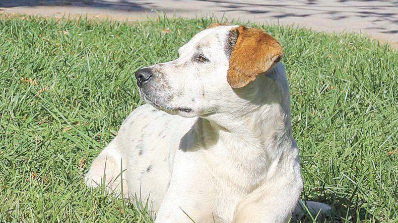 Los veterinarios recomiendan no pasearlos cuando el sol está muy fuerte.