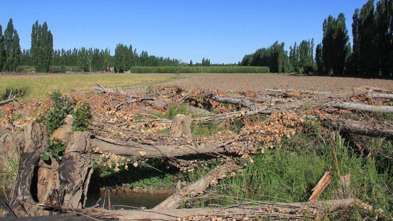 En Cipolletti rige una ordenanza que penaliza a las tierras sin producción.