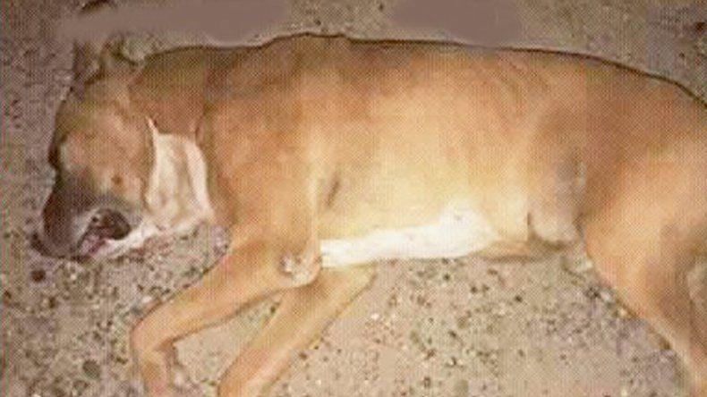 Por los petardos, un perro murió de un paro cardíaco en medio de la calle