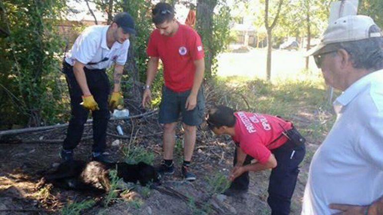 El perro fue rescatado por personal del área de Protección Civil.