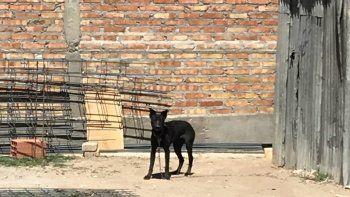 Denuncian que dejaron a un perro bajo el sol y sin comida en una obra