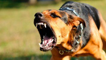 Perros atacaron a una mujer y el dueño la abandonó