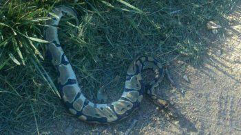 Una vecina encontró el reptil mientras caminaba por la plaza del barrio.