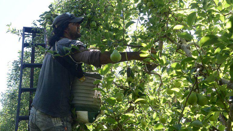 La cosecha bajó notablemente en cantidad y calidad.