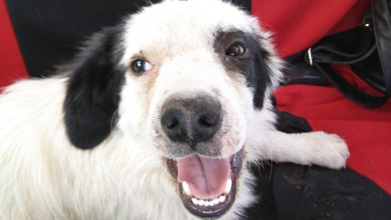 Abandonaron más perros en la casa de Tarzán y les buscan un hogar