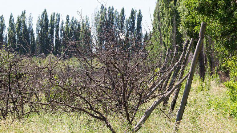 Preparan el loteo de las 500 hectáreas de zona norte