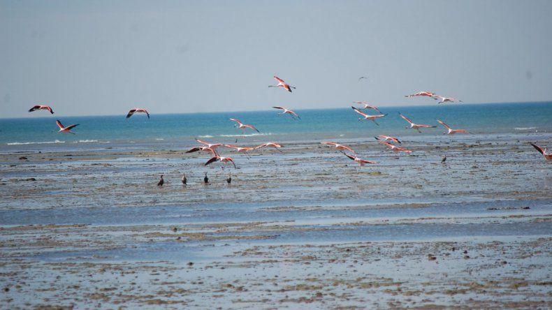 El turismo de avistaje de aves está creciendo en Las Grutas. Construyen un hotel para los visitantes.