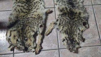 bronca por un vecino que vende cueros de gato montes en face