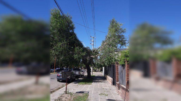 Denunciaron a Edersa por la desastrosa poda del barrio Prieto