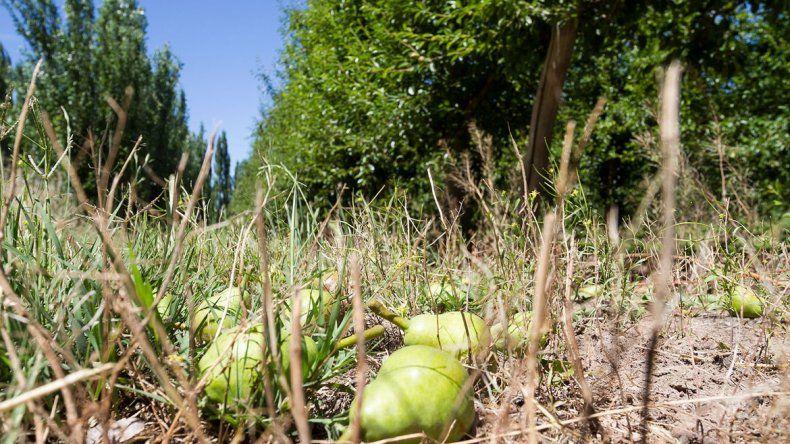 La actividad frutícola en el Alto Valle está viviendo una profunda crisis.