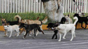 alerta: aparecieron mas perros envenenados en las plazas
