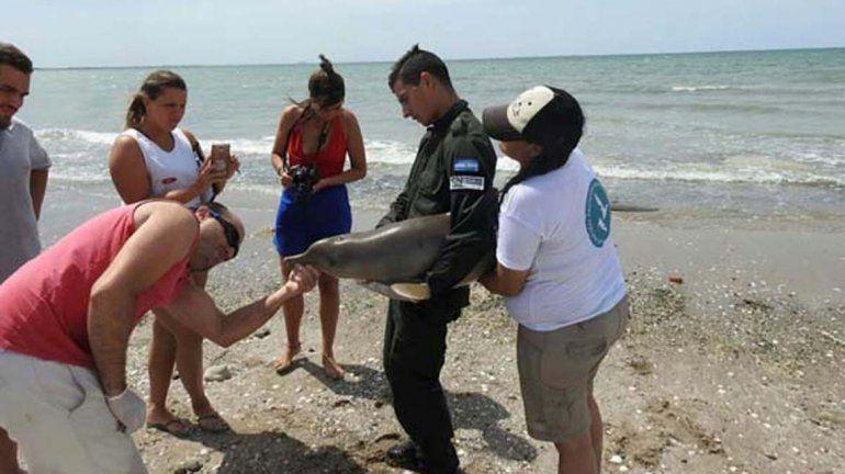Rescataron y devolvieron al mar a un delfín en Las Grutas