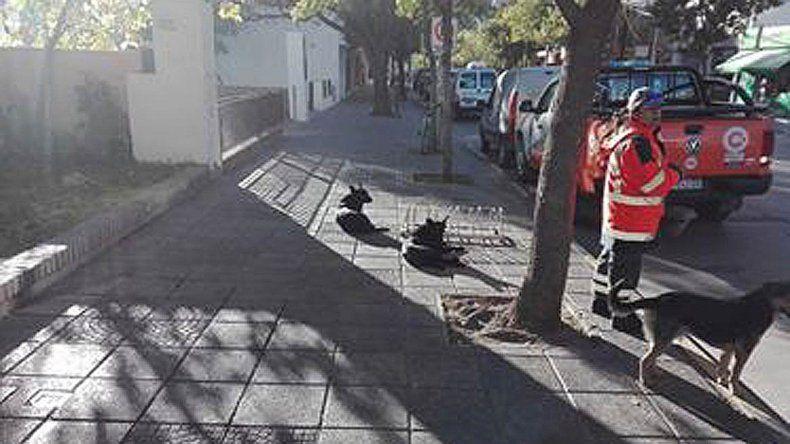 Cinco perros atacaron a un hombre en la puerta de la Municipalidad