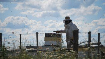 iniciativa nacional: hoy comienza la semana de la miel en rio negro
