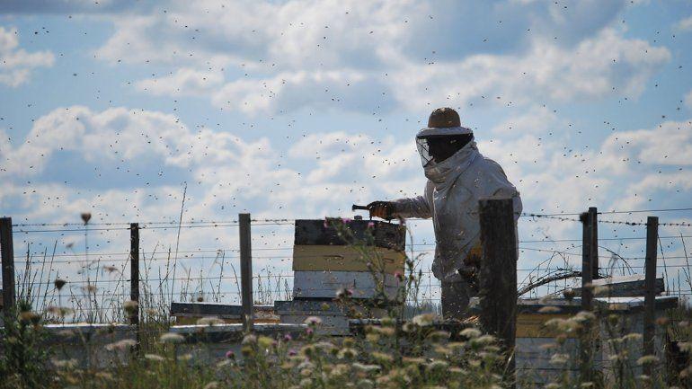 Hoy comienza la semana de la miel en Río Negro