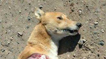 en roca denuncian que despellejan perros para realizar rituales