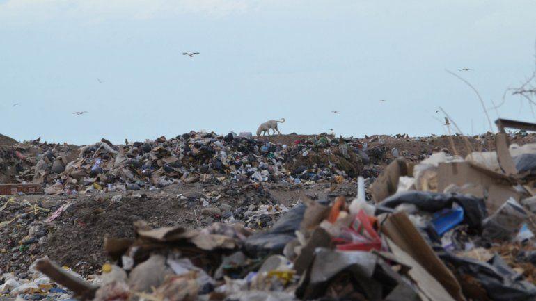 El proyecto contempla obtener energía de los residuos.