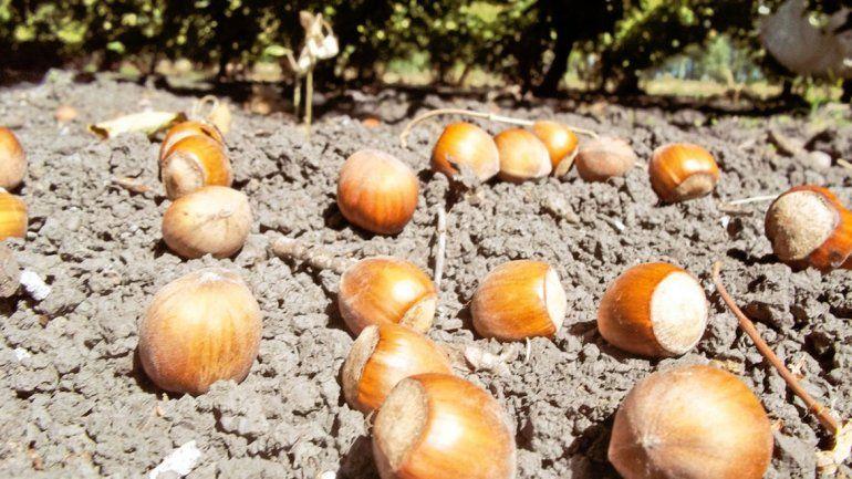 Los frutos secos ganan terreno en la producción regional
