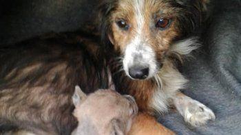 vecinos heroes salvaron a un perrito de morir asfixiado