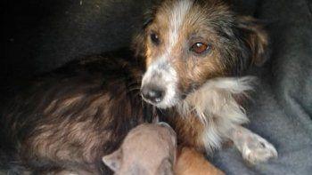 La perra con su cachorrito, luego de que lo salvaran de morir asfixiado.