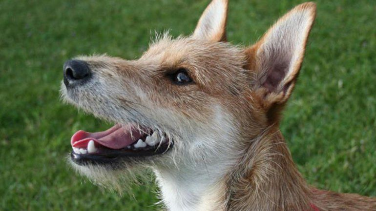 El Alto Valle será sede de una capacitación sobre derechos de los animales