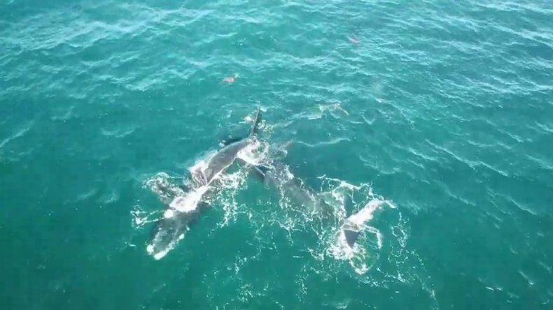 Llegaron a Las Grutas las primeras ballenas de la temporada