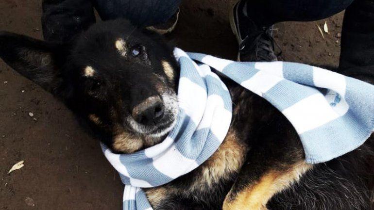 Los perritos de la Isla Jordán recibieron donaciones de abrigos y comida