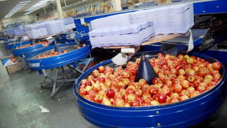 En Río Negro hay 308.861 toneladas de fruta conservada en frío.