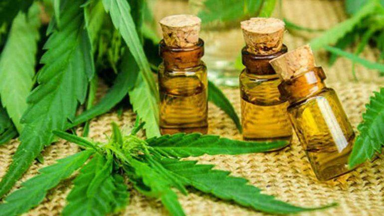 La familia podrá utilizar aceite de cannabis o cultivar sus propias plantas.